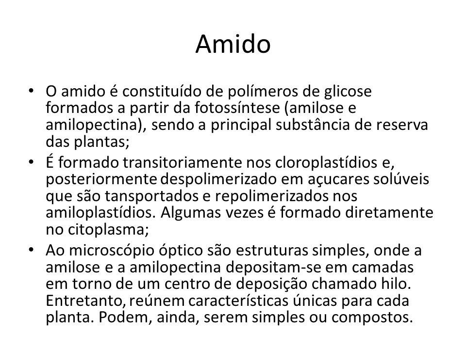 Amido O amido é constituído de polímeros de glicose formados a partir da fotossíntese (amilose e amilopectina), sendo a principal substância de reserv