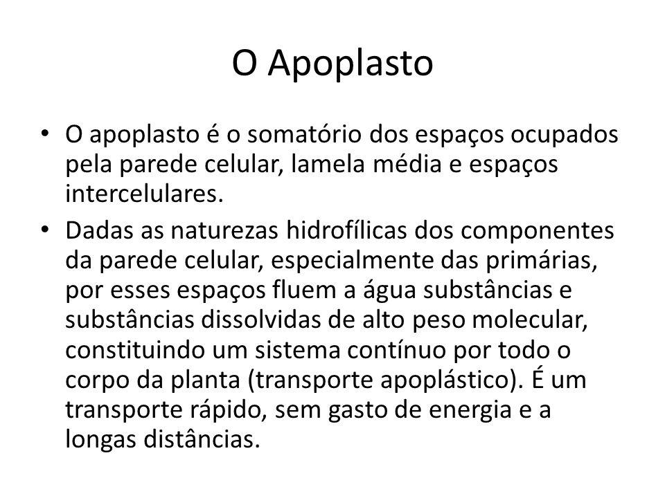 O Apoplasto O apoplasto é o somatório dos espaços ocupados pela parede celular, lamela média e espaços intercelulares. Dadas as naturezas hidrofílicas