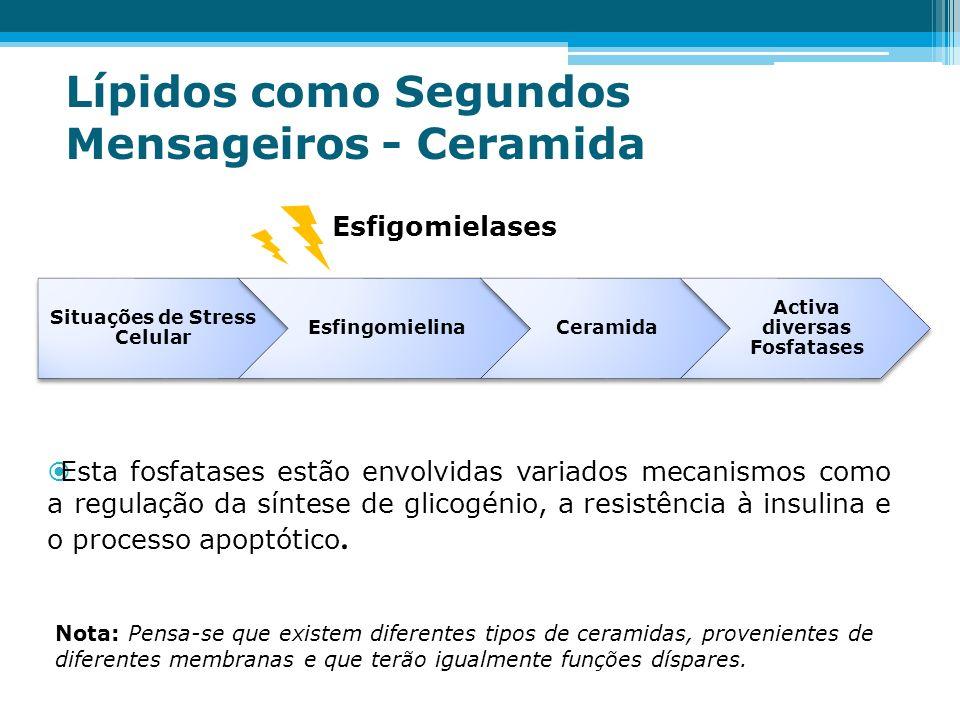 Lípidos como Segundos Mensageiros - Ceramida Situações de Stress Celular EsfingomielinaCeramida Activa diversas Fosfatases Esfigomielases Esta fosfata