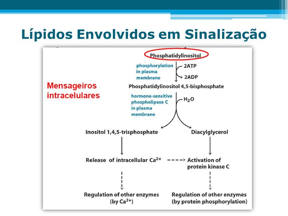 Lípidos Envolvidos em Sinalização