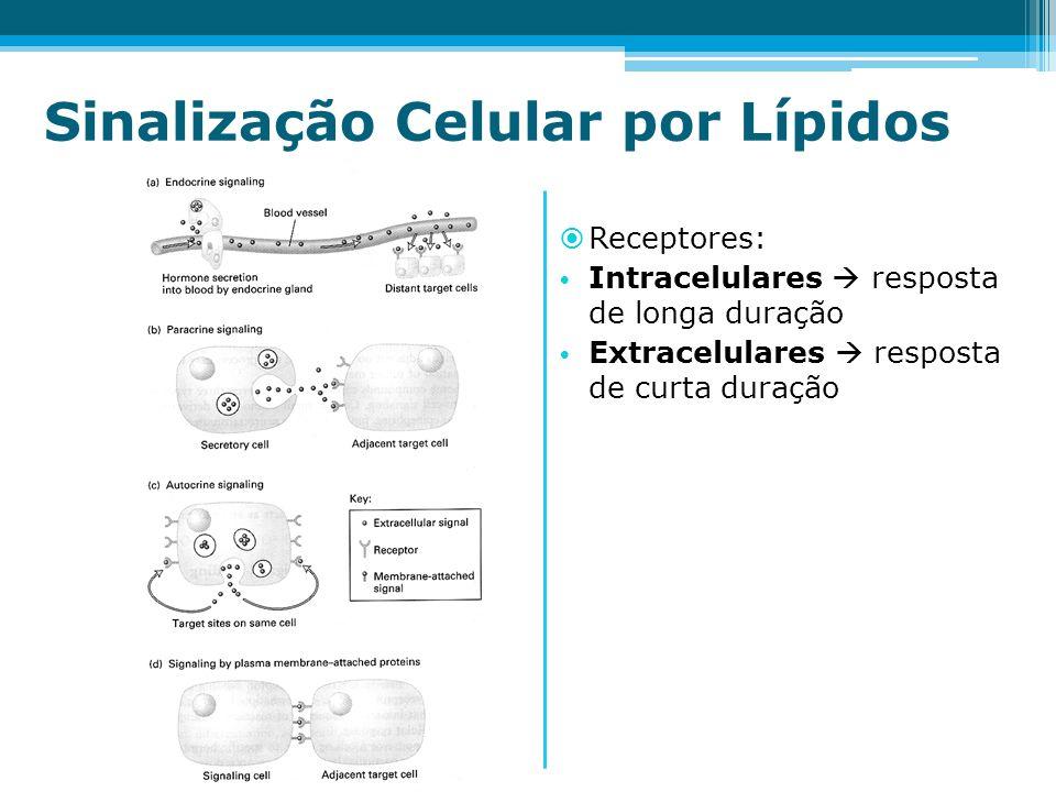 Sinalização Celular por Lípidos Receptores: Intracelulares resposta de longa duração Extracelulares resposta de curta duração