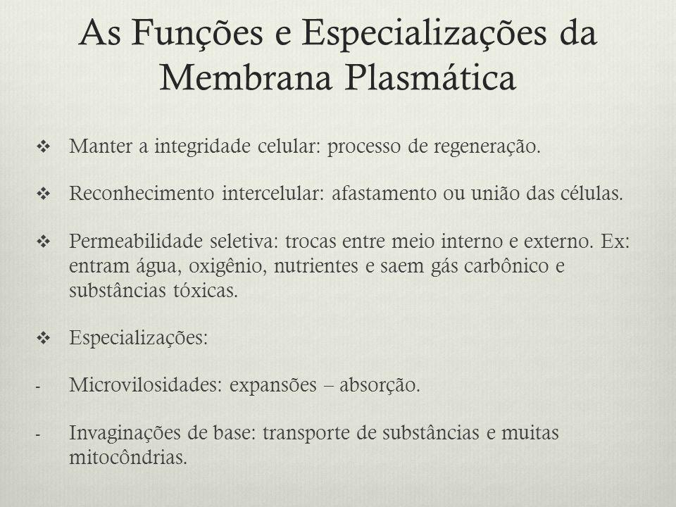As Funções e Especializações da Membrana Plasmática Manter a integridade celular: processo de regeneração. Reconhecimento intercelular: afastamento ou