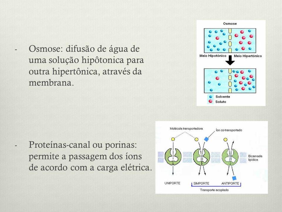 - Osmose: difusão de água de uma solução hipôtonica para outra hipertônica, através da membrana. - Proteínas-canal ou porinas: permite a passagem dos