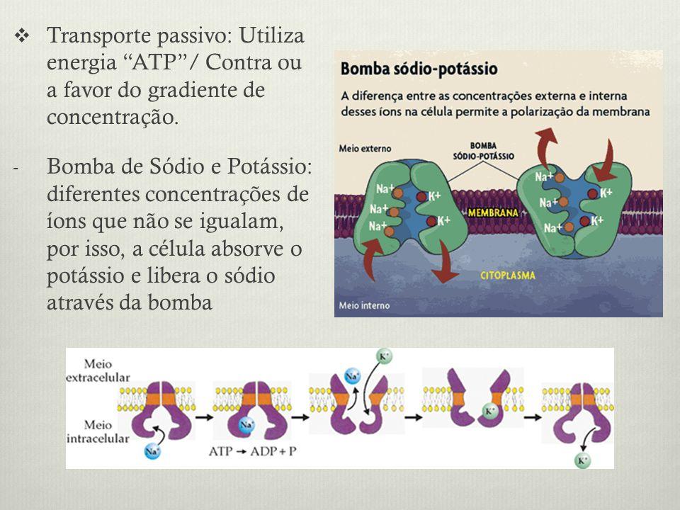 Transporte passivo: Utiliza energia ATP/ Contra ou a favor do gradiente de concentração. - Bomba de Sódio e Potássio: diferentes concentrações de íons