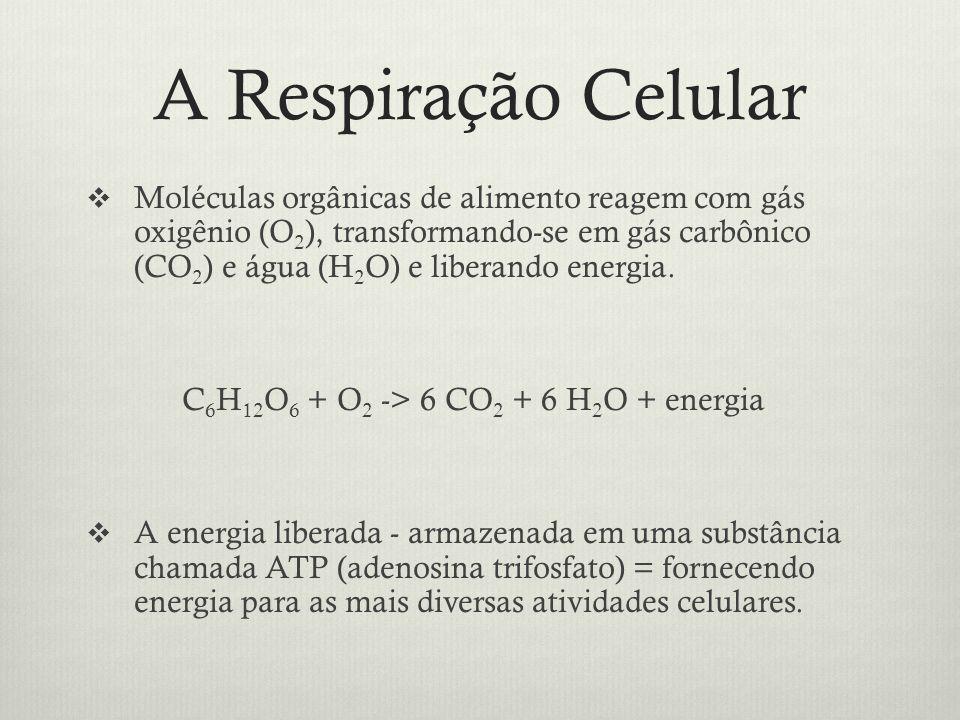 A Respiração Celular Moléculas orgânicas de alimento reagem com gás oxigênio (O 2 ), transformando-se em gás carbônico (CO 2 ) e água (H 2 O) e libera