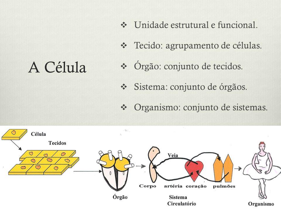A Célula Unidade estrutural e funcional. Tecido: agrupamento de células. Órgão: conjunto de tecidos. Sistema: conjunto de órgãos. Organismo: conjunto