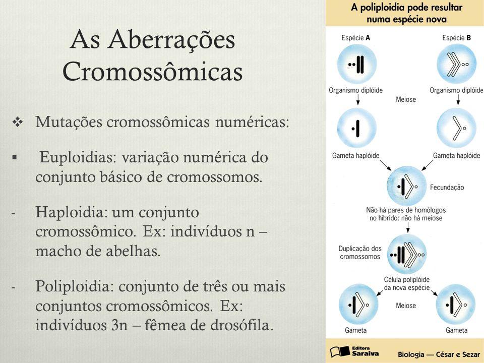 As Aberrações Cromossômicas Mutações cromossômicas numéricas: Euploidias: variação numérica do conjunto básico de cromossomos. - Haploidia: um conjunt