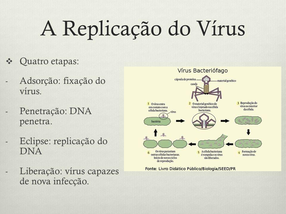 A Replicação do Vírus Quatro etapas: - Adsorção: fixação do vírus. - Penetração: DNA penetra. - Eclipse: replicação do DNA - Liberação: vírus capazes