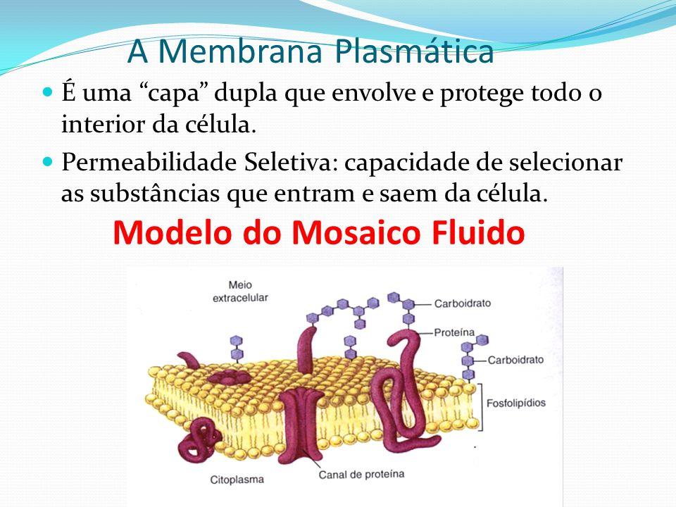 Parede Celular ou parede celulósica, é uma estrutura que envolve a membrana plasmática nas células dos vegetais, fungos, algas e dos organismos procar