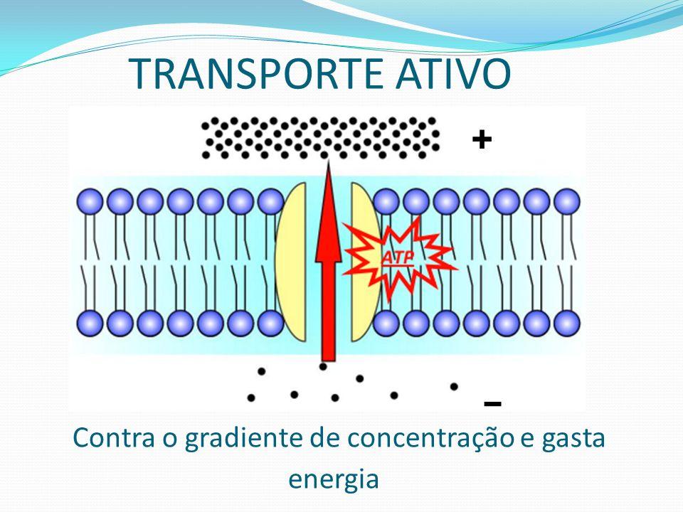 DIFUSÃO SIMPLES Ex. CO2, O2, Vitaminas lipossolúveis(A/D/E/K), Outros gases + -