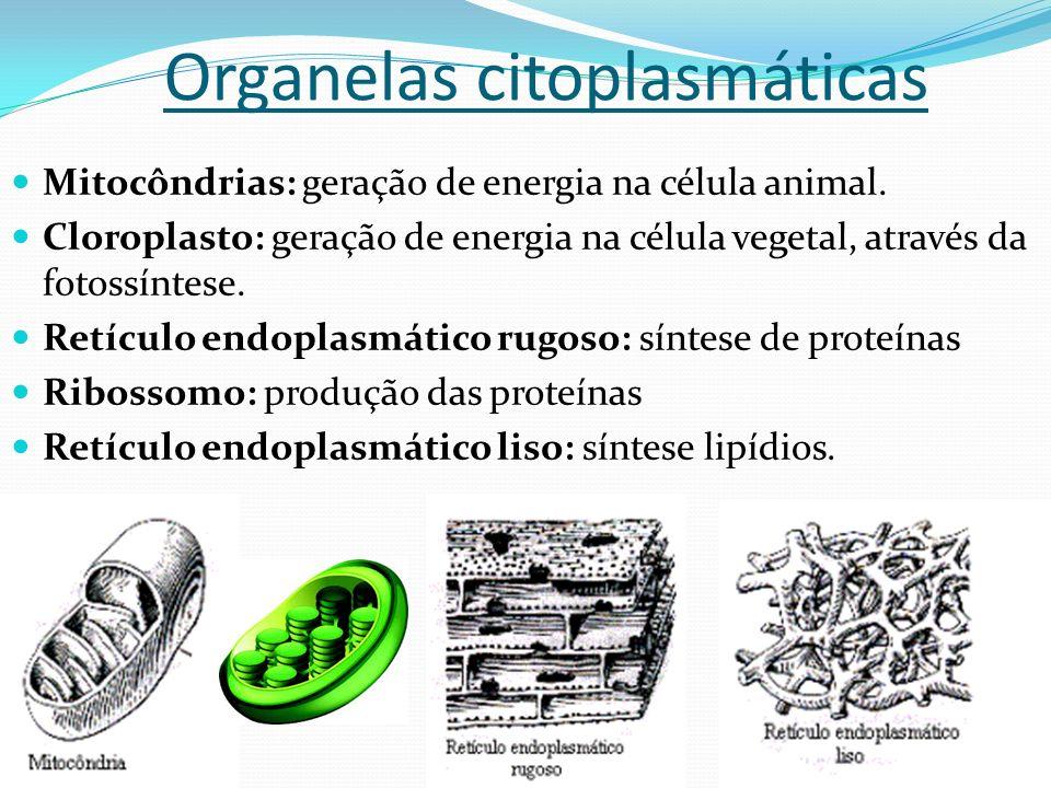 Principais características dos componentes básicos da célula citoplasma Auxilia a morfologia da célula armazenamento de substâncias essências à vida.