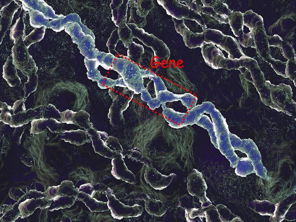 Núcleo da célula com DNA