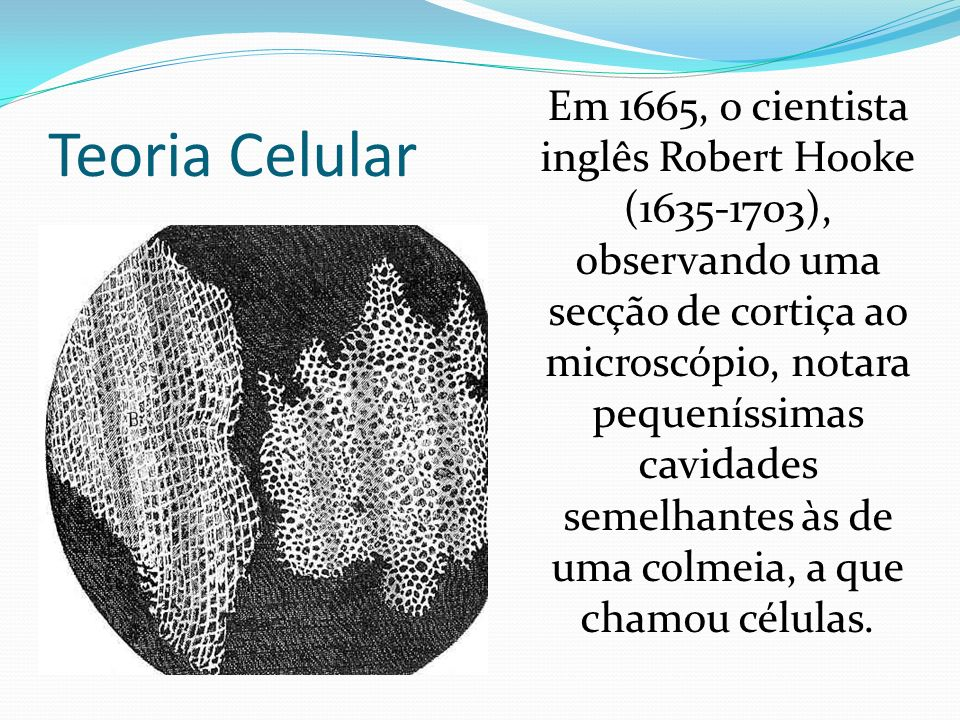 O microscópio composto Foi com Robert Hooke, da Inglaterra, que surgiu o nome célula. Com um microscópio mais avançado que o de Leeuwenhoek, pois cons