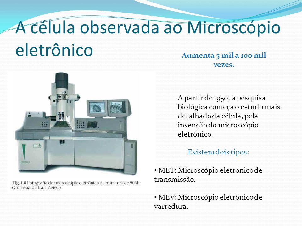A célula observada ao microscópio óptico Aumento no microscópio óptico de 100 a 1500 vezes. Visualização somente de citoplasma, núcleo e parede celula