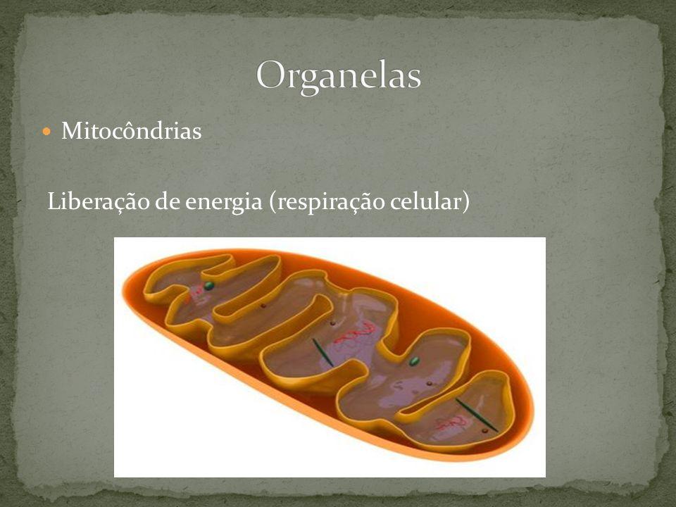 Mitocôndrias Liberação de energia (respiração celular)