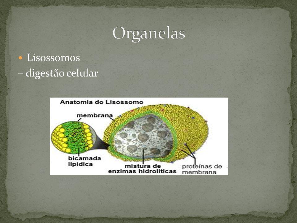 Lisossomos – digestão celular