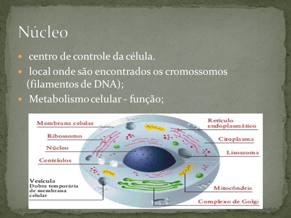 centro de controle da célula. local onde são encontrados os cromossomos (filamentos de DNA); Metabolismo celular - função;