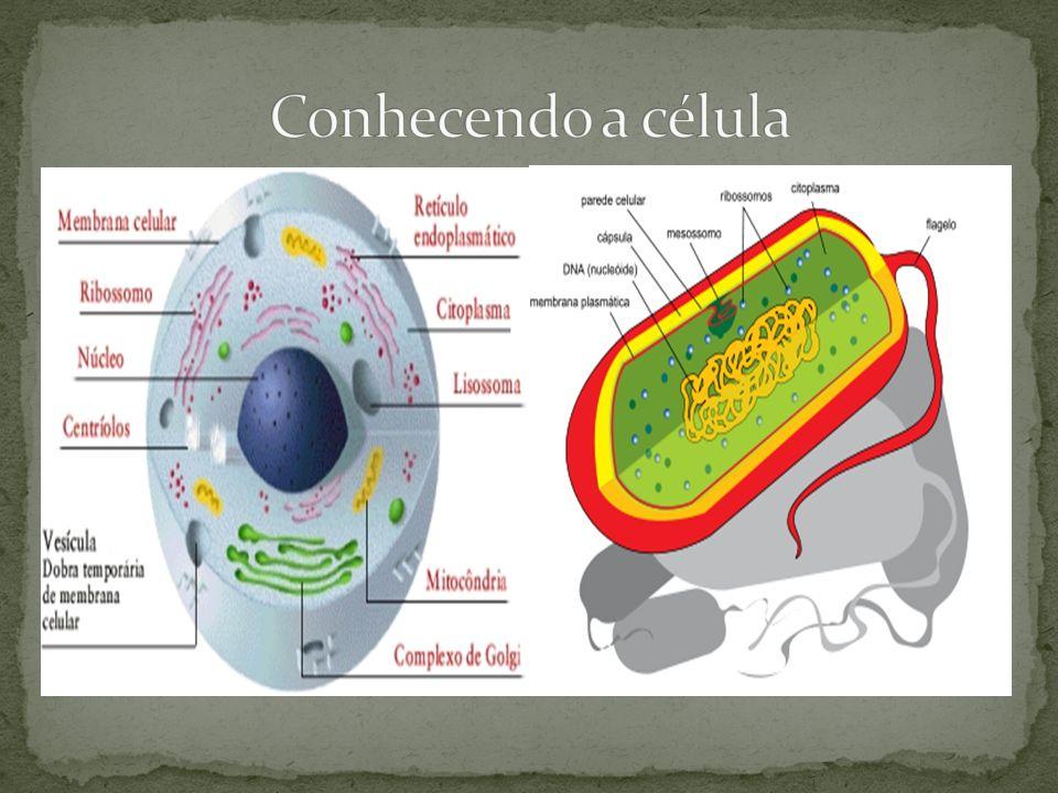 Membrana celular/ plasmalema Funções definição de limites (delimitação); Separação do meio extracelular do intracelular; Permeabilidade seletiva - controla entrada e saída de substâncias da célula;