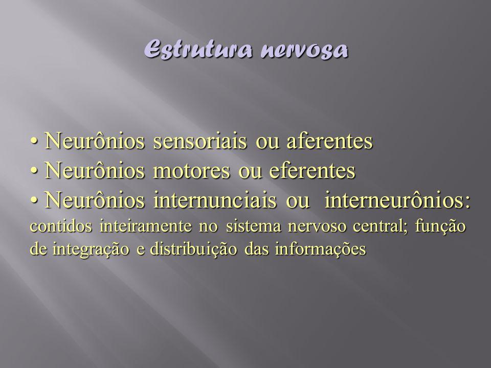 Neurônios sensoriais ou aferentes Neurônios sensoriais ou aferentes Neurônios motores ou eferentes Neurônios motores ou eferentes Neurônios internunci