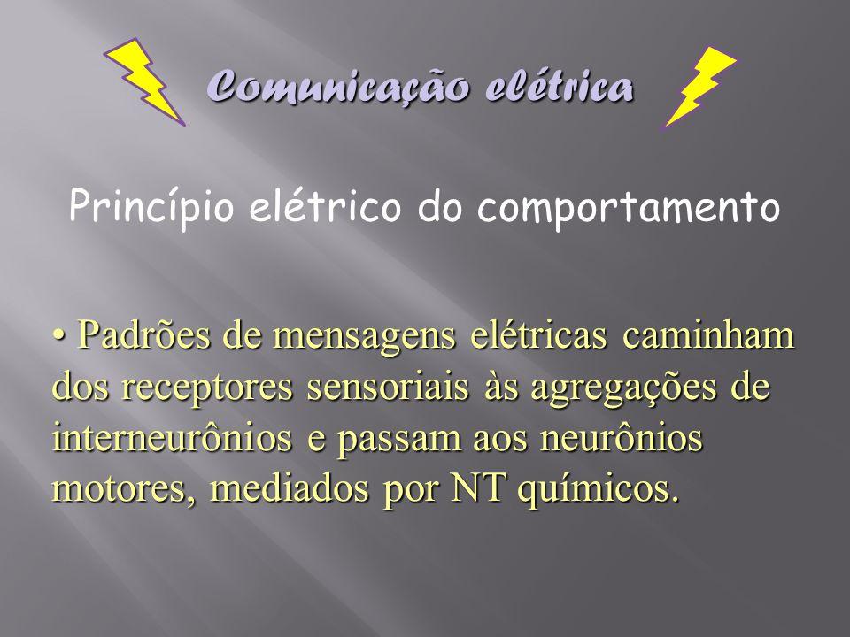 Padrões de mensagens elétricas caminham dos receptores sensoriais às agregações de interneurônios e passam aos neurônios motores, mediados por NT quím