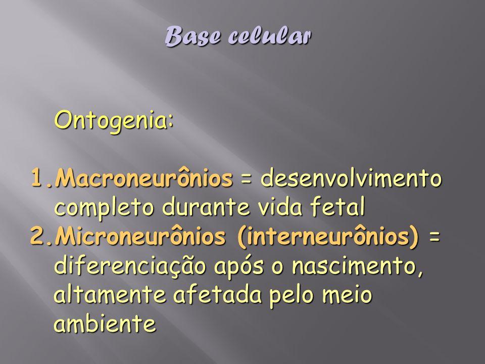 Ontogenia: 1.Macroneurônios = desenvolvimento completo durante vida fetal 2.Microneurônios (interneurônios) = diferenciação após o nascimento, altamen