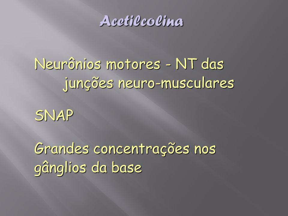 Acetilcolina Neurônios motores - NT das junções neuro-musculares SNAP Grandes concentrações nos gânglios da base