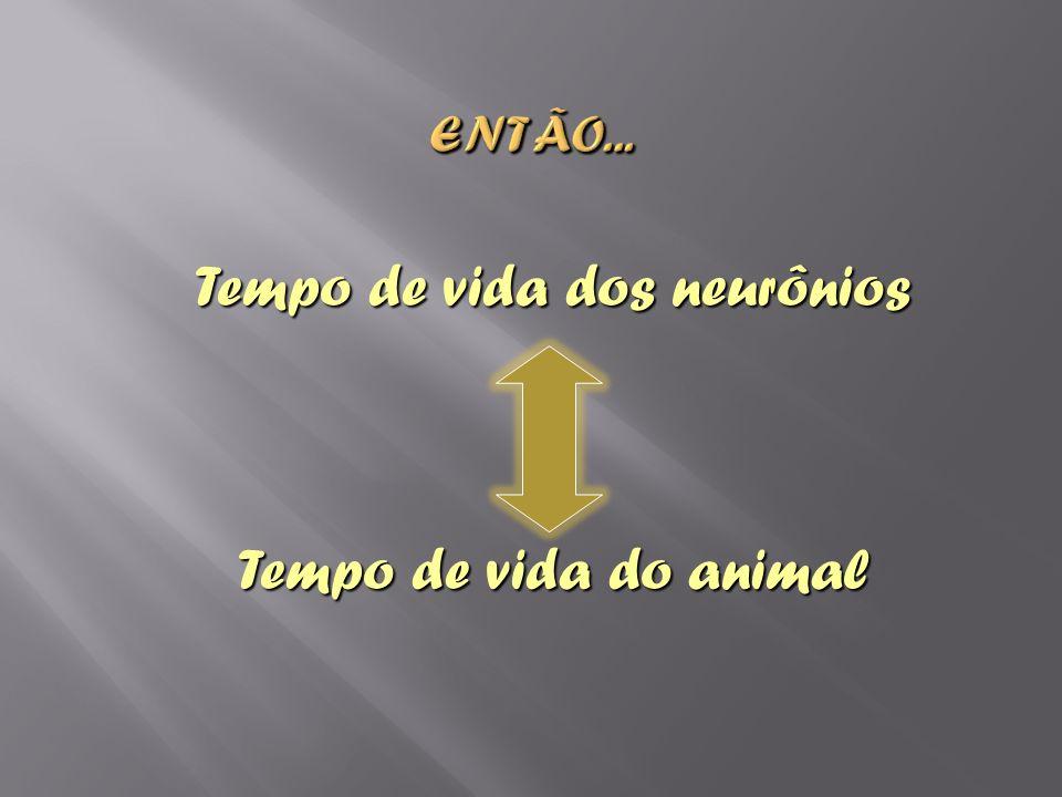 Tempo de vida dos neurônios Tempo de vida do animal