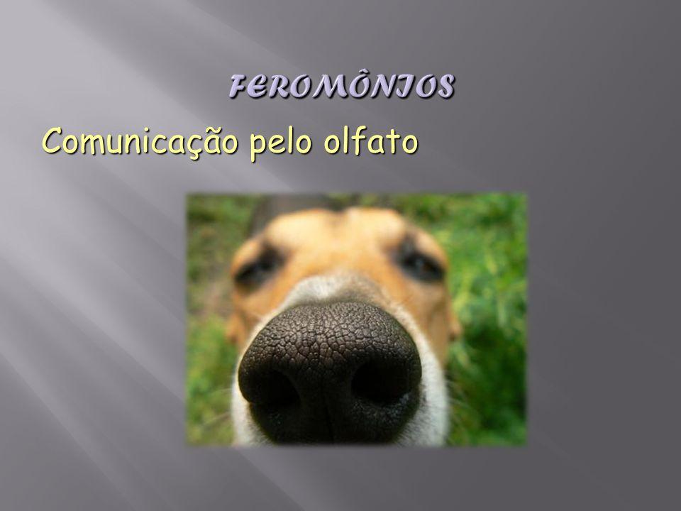 Comunicação pelo olfato