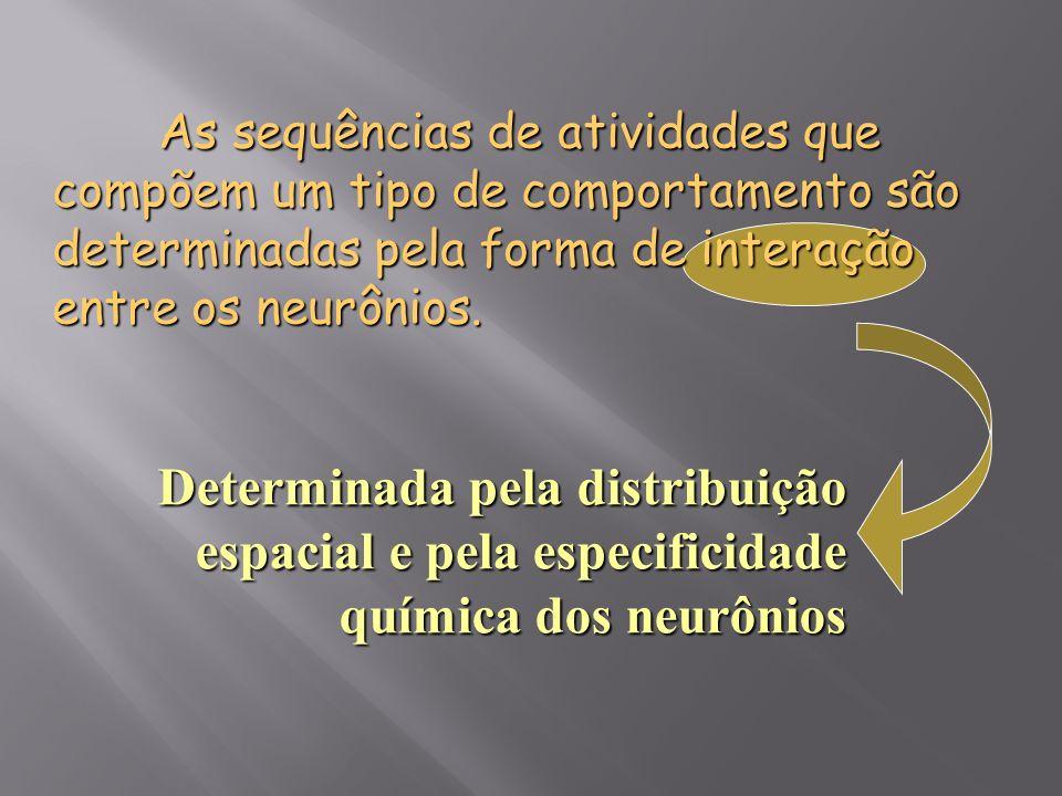 As sequências de atividades que compõem um tipo de comportamento são determinadas pela forma de interação entre os neurônios. Determinada pela distrib