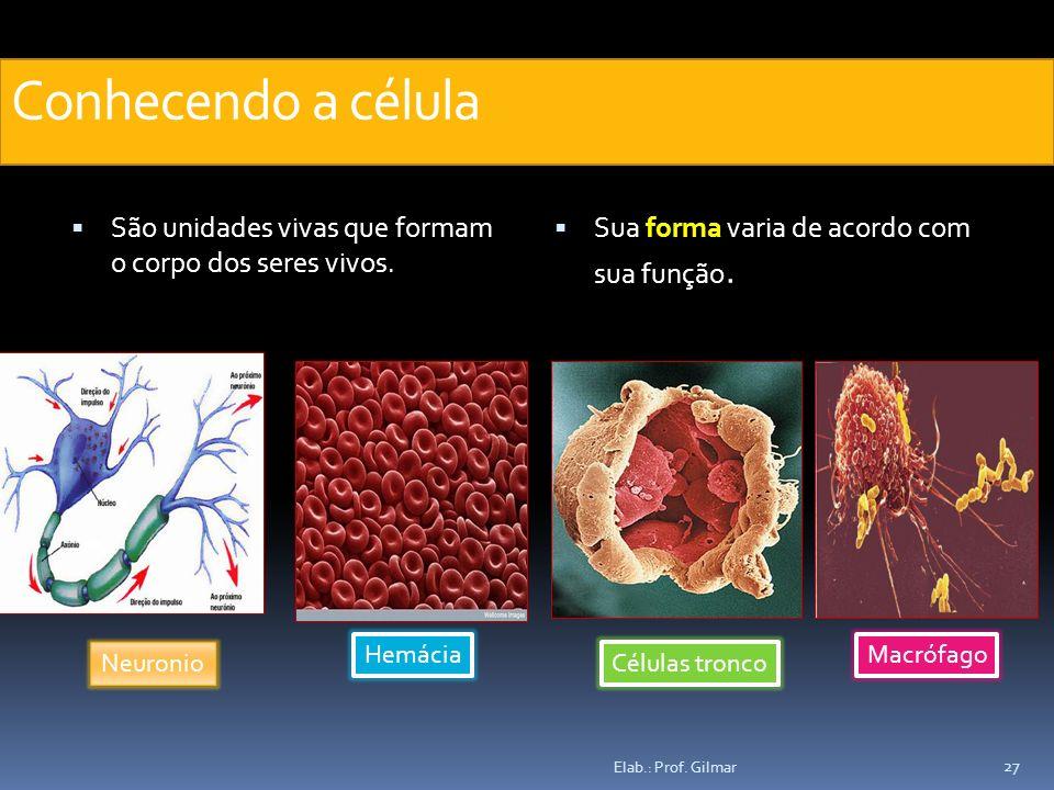 Conhecendo a célula São unidades vivas que formam o corpo dos seres vivos. Sua forma varia de acordo com sua função. Neuronio Hemácia Células tronco M