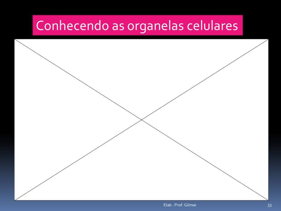 Conhecendo as organelas celulares 33 Elab.: Prof. Gilmar