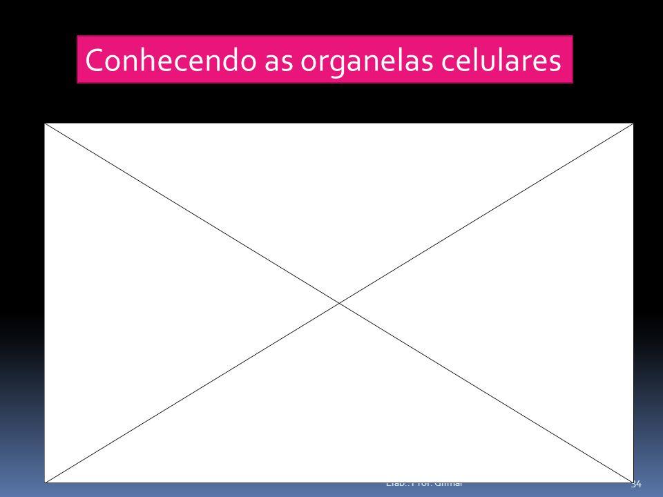 Conhecendo as organelas celulares 34 Elab.: Prof. Gilmar