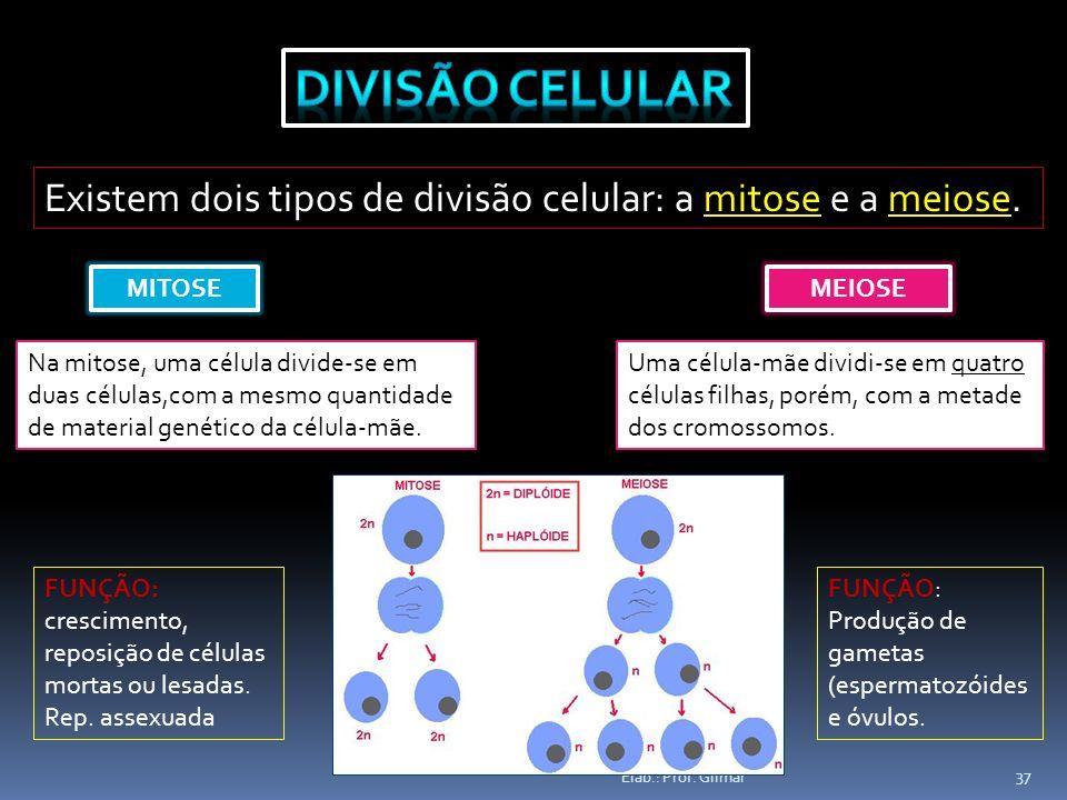 Elab.: Prof. Gilmar 37 Existem dois tipos de divisão celular: a mitose e a meiose. MITOSE Na mitose, uma célula divide-se em duas células,com a mesmo
