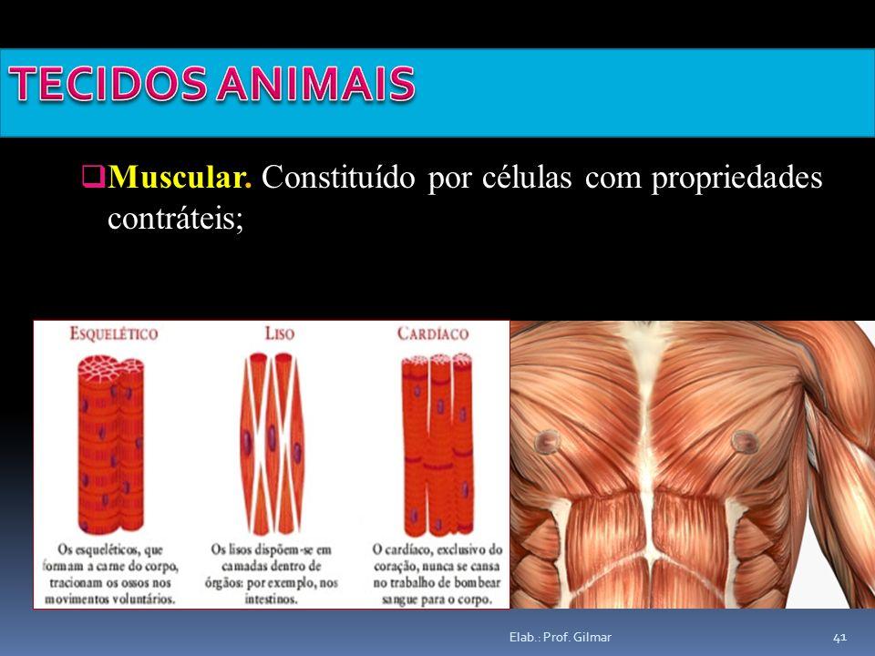 Elab.: Prof. Gilmar 41 Muscular. Constituído por células com propriedades contráteis;