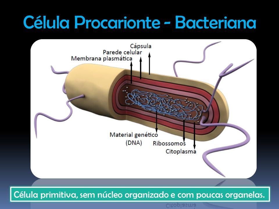 Célula Procarionte - Bacteriana Célula primitiva, sem núcleo organizado e com poucas organelas.