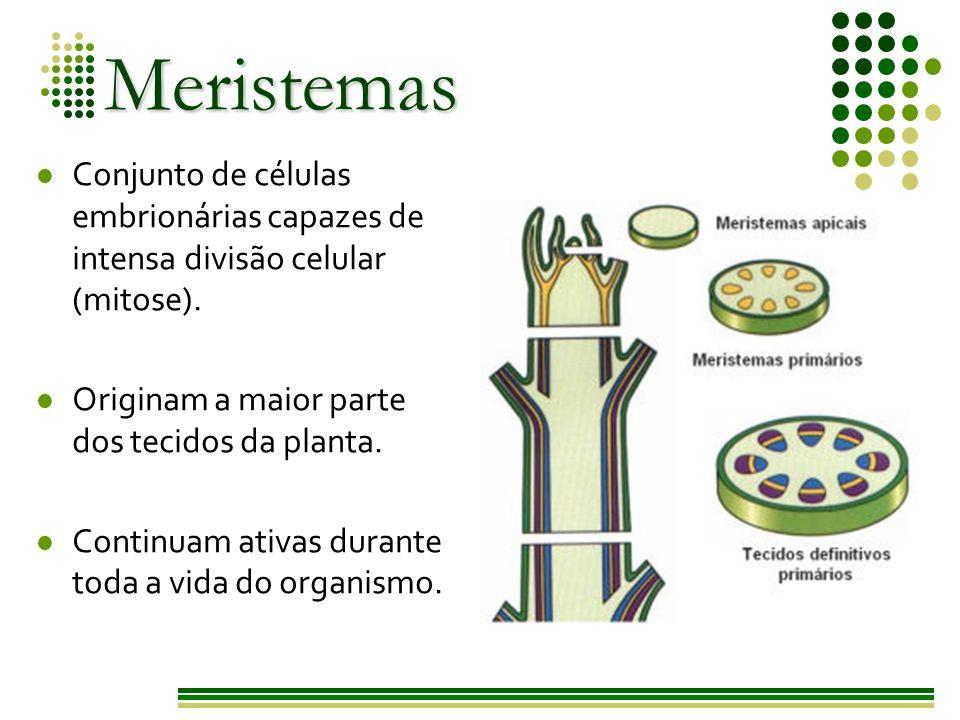Meristemas Os principais meristemas são: embrionários - ápice caulinar e radicular Primários: alta capacidade de multiplicação celular Secundários: protoderme meristema fundamental procâmbio câmbio interfascicular felogênio