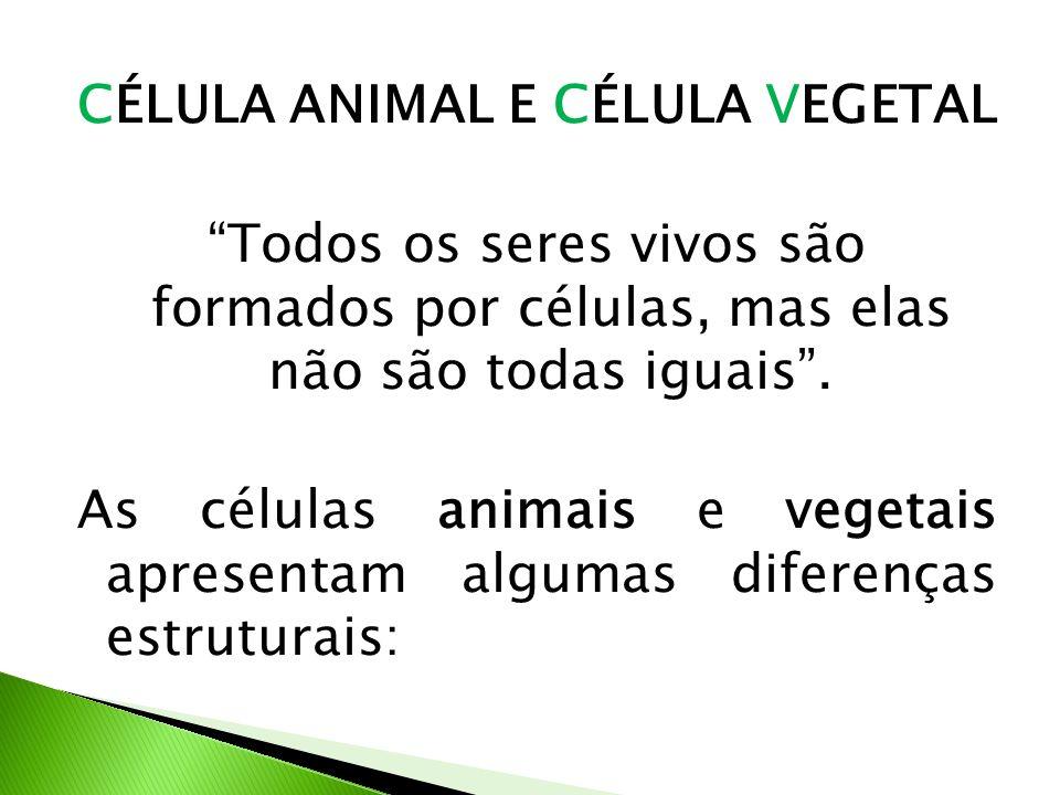 CÉLULA ANIMAL E CÉLULA VEGETAL Todos os seres vivos são formados por células, mas elas não são todas iguais. As células animais e vegetais apresentam