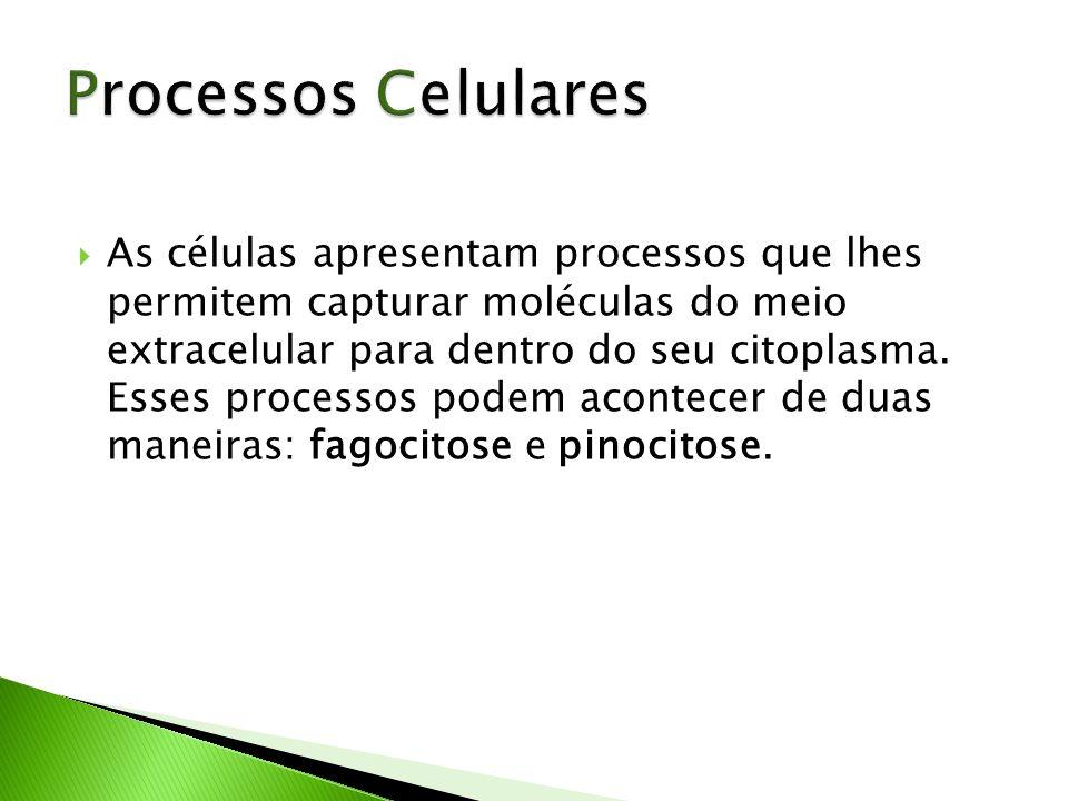 As células apresentam processos que lhes permitem capturar moléculas do meio extracelular para dentro do seu citoplasma. Esses processos podem acontec