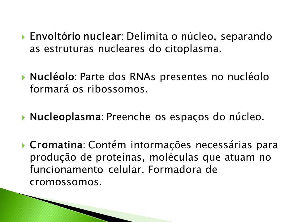Envoltório nuclear: Delimita o núcleo, separando as estruturas nucleares do citoplasma. Nucléolo: Parte dos RNAs presentes no nucléolo formará os ribo