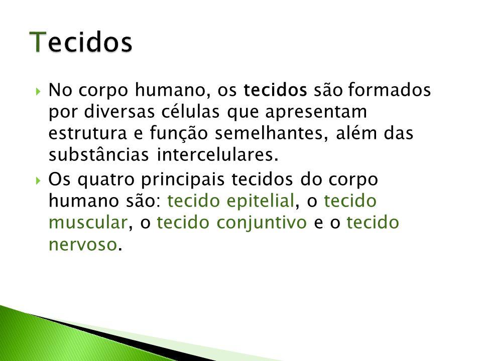 No corpo humano, os tecidos são formados por diversas células que apresentam estrutura e função semelhantes, além das substâncias intercelulares. Os q