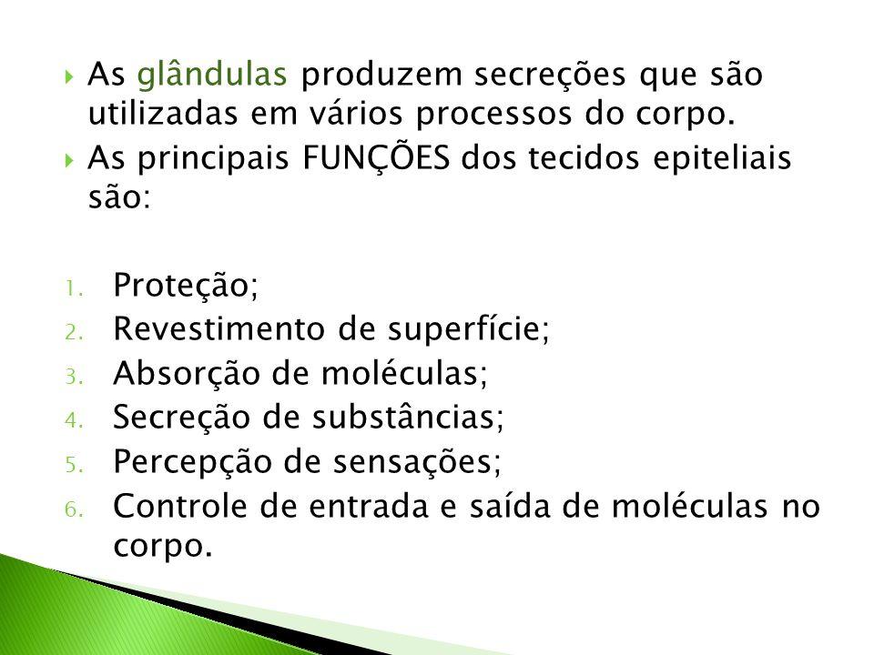 As glândulas produzem secreções que são utilizadas em vários processos do corpo. As principais FUNÇÕES dos tecidos epiteliais são: 1. Proteção; 2. Rev