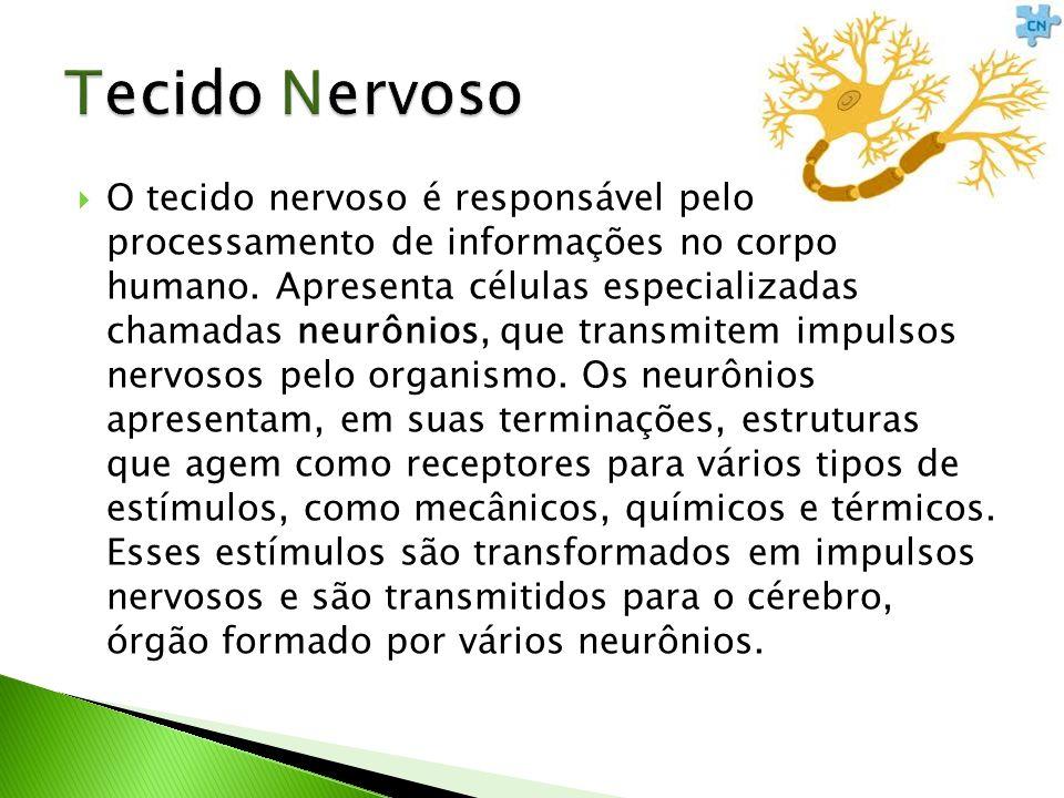 O tecido nervoso é responsável pelo processamento de informações no corpo humano. Apresenta células especializadas chamadas neurônios, que transmitem