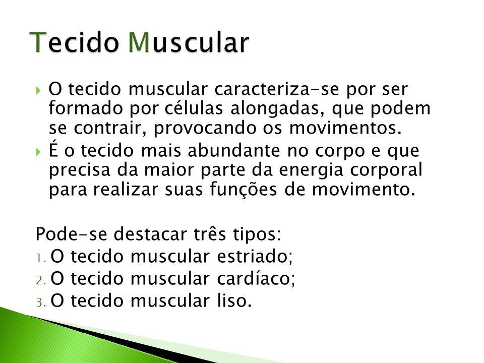 O tecido muscular caracteriza-se por ser formado por células alongadas, que podem se contrair, provocando os movimentos. É o tecido mais abundante no