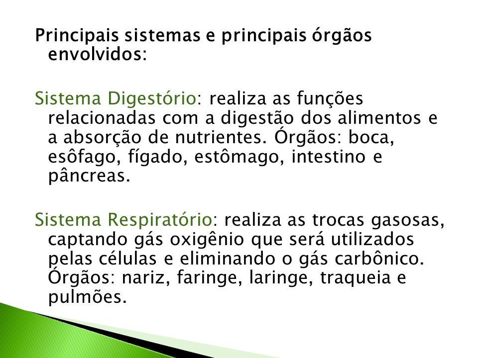 Principais sistemas e principais órgãos envolvidos: Sistema Digestório: realiza as funções relacionadas com a digestão dos alimentos e a absorção de n