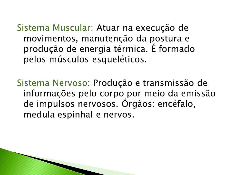 Sistema Muscular: Atuar na execução de movimentos, manutenção da postura e produção de energia térmica. É formado pelos músculos esqueléticos. Sistema