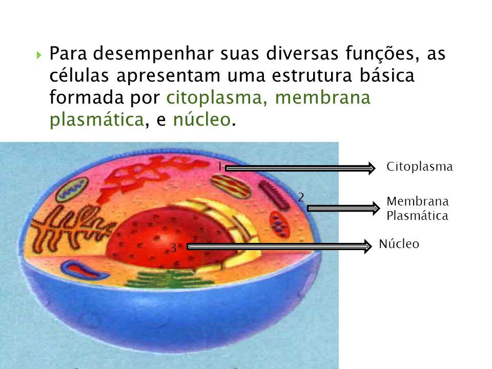 Para desempenhar suas diversas funções, as células apresentam uma estrutura básica formada por citoplasma, membrana plasmática, e núcleo. 1 2 3 Citopl