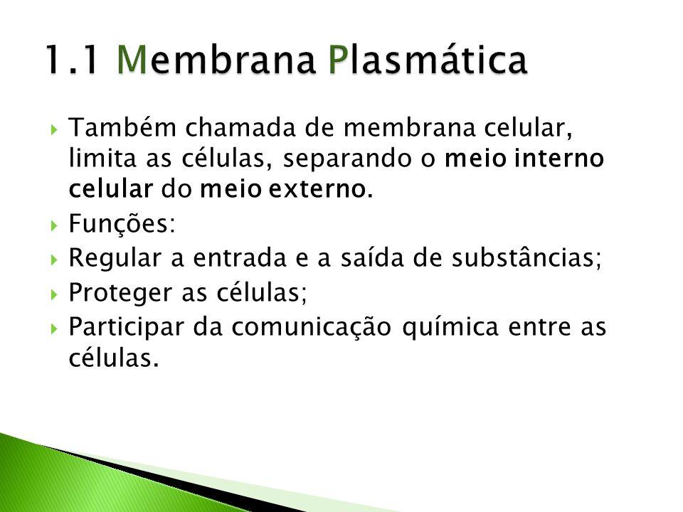 Também chamada de membrana celular, limita as células, separando o meio interno celular do meio externo. Funções: Regular a entrada e a saída de subst