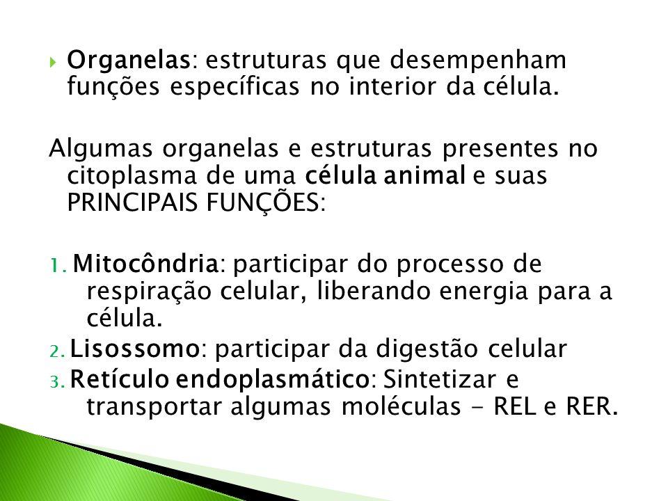 Organelas: estruturas que desempenham funções específicas no interior da célula. Algumas organelas e estruturas presentes no citoplasma de uma célula