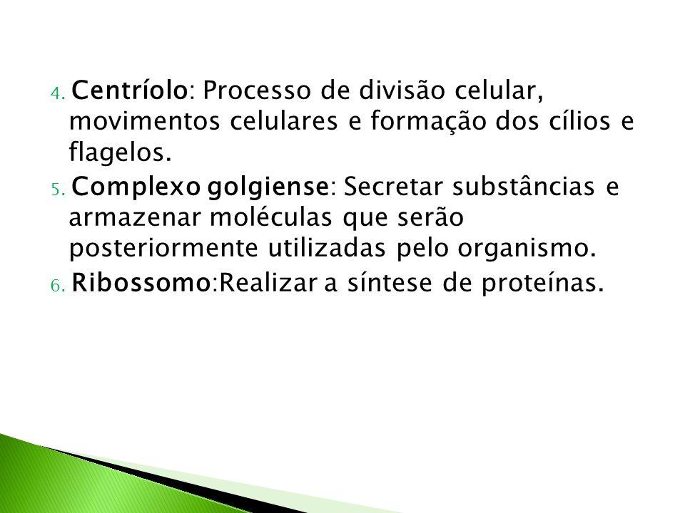 4. Centríolo: Processo de divisão celular, movimentos celulares e formação dos cílios e flagelos. 5. Complexo golgiense: Secretar substâncias e armaze