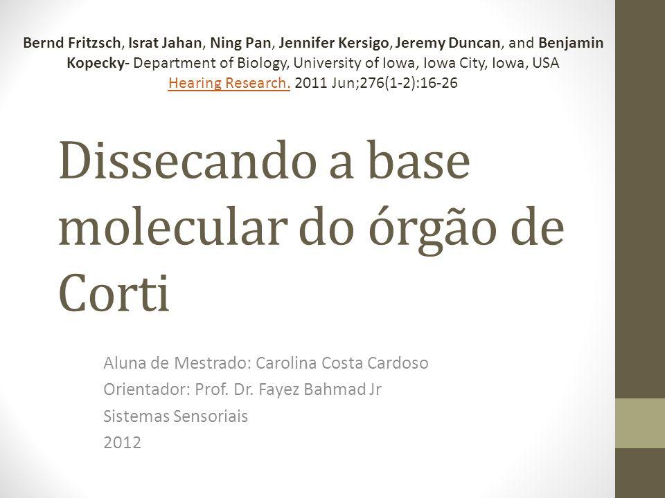 Dissecando a base molecular do órgão de Corti Aluna de Mestrado: Carolina Costa Cardoso Orientador: Prof.